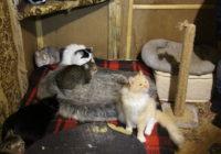 Кошки в приюте Право на жизнь